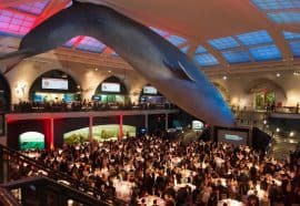 The Whale Room at the American Museum of Natural History